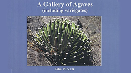 A Gallery of Agaves - Pilbeam