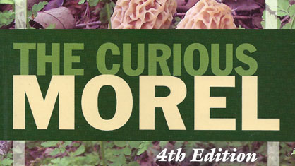 The Curious Morel - Larry Lonik